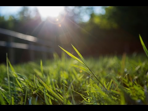 Turning Grass Into Green Gas | Sustainable Energy