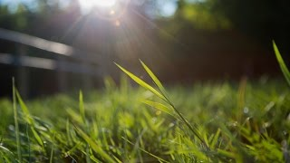 Turning grass into green gas   Sustainable Energy