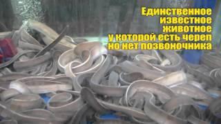 7 РЕАЛЬНО СУЩЕСТВУЮЩИХ МОНСТРОВ