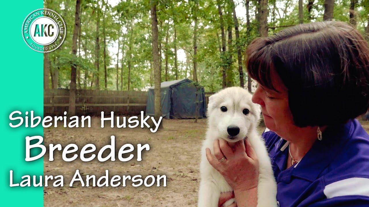 I am a Breeder - Laura Anderson - Siberian Husky