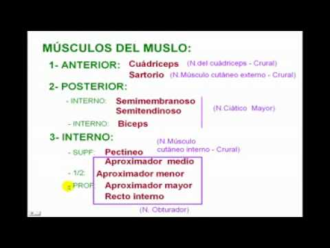 Miologia de Miembro Inferior 4 Diagnostico X - YouTube