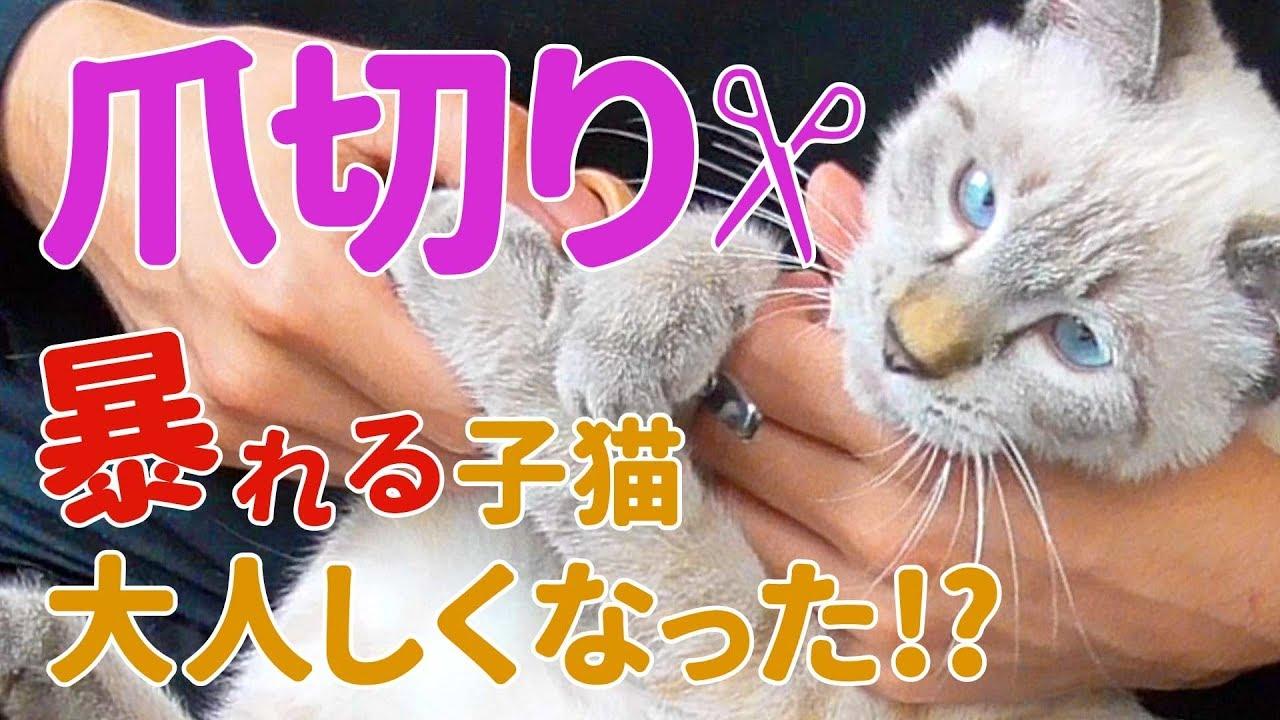 切り 子猫 爪
