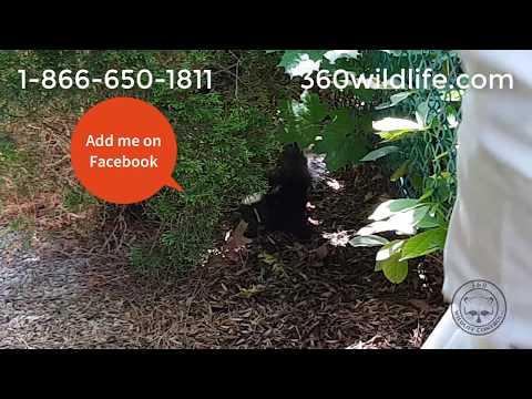 360 Wildlife Control | Skunk Removal / Rescue Toronto