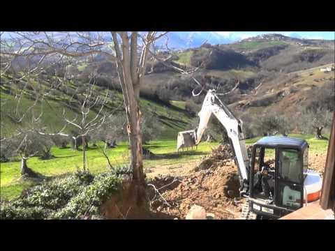 bobcat E50 excavator taking out large trees