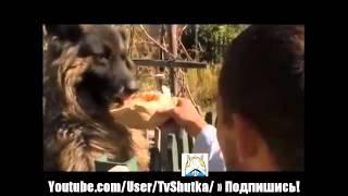 Местный житель Донецка подкармливает оставленных беженцами домашних животных НОВОСТИ УКРАИНЫ