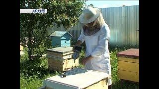 Пчеловоды Марий Эл подвели итоги 2017-го года