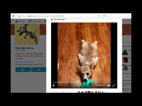 Как сохранить видео из твиттера на компьютер
