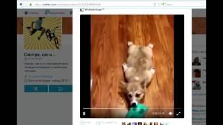 Как скачать видео с Твиттера (самый простой способ)