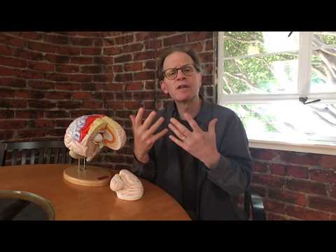 dr.-dan-siegel's-hand-model-of-the-brain