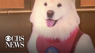 Flat Teddy, the cardboard therapy dog, visits hospital patients