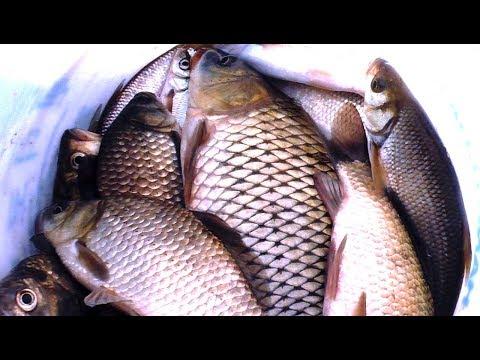 РЫБАЛКА НА АМУРЕ,РЫБА КЛЮЁТ КАК ИЗ ПУЛЕМЁТА НА ЭТУ НАЖИВКУ, рыбалка на поплавочную удочку!