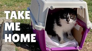 Kitten walked into the carrier herself for adoption