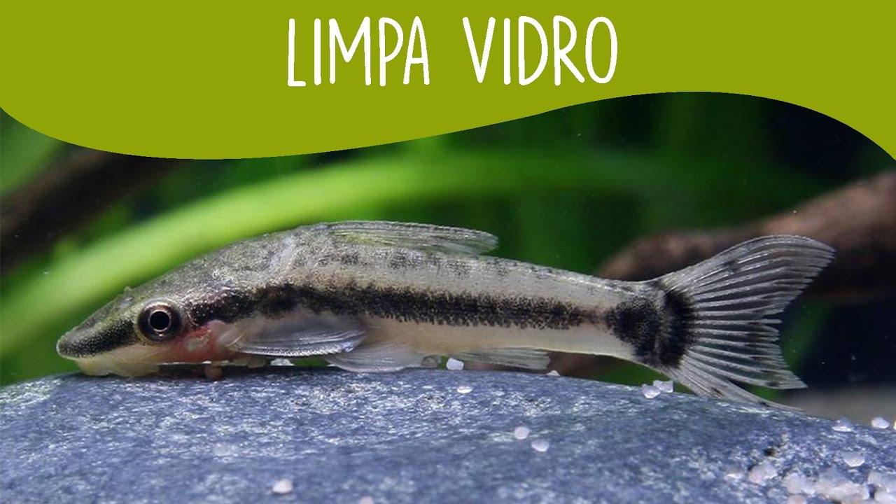 Limpa Vidro - Minha Fauna