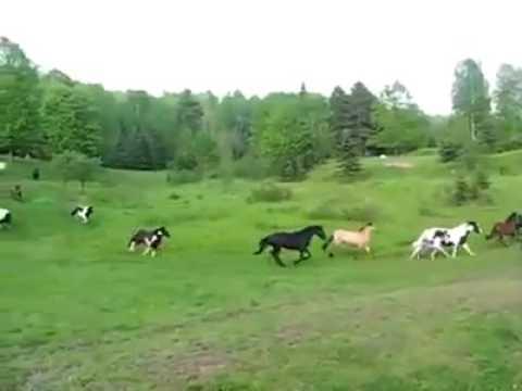 Menakjubkan., kuda di alam bebas.. sangat indah