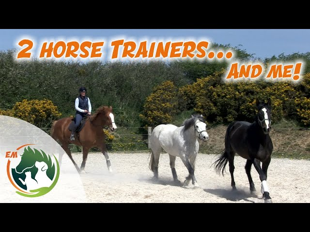 Using trained horses to work young horse Oisin