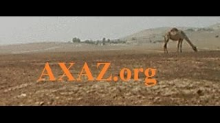 3. Арабский язык. Арабская пословица про белого быка . Урок ведет Марк Ниран (Харах)