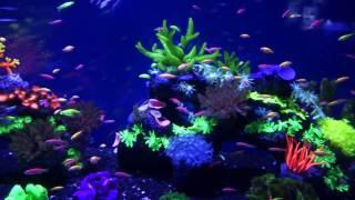 Киевский океанариум Oceanarium 2017 Aquarium(, 2017-01-20T06:23:43.000Z)