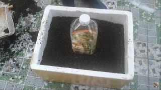 Tận dụng Bình 5 lít chứa rác thải nhà bếp trực tiếp trong thùng xốp   | Khoa Hien 322