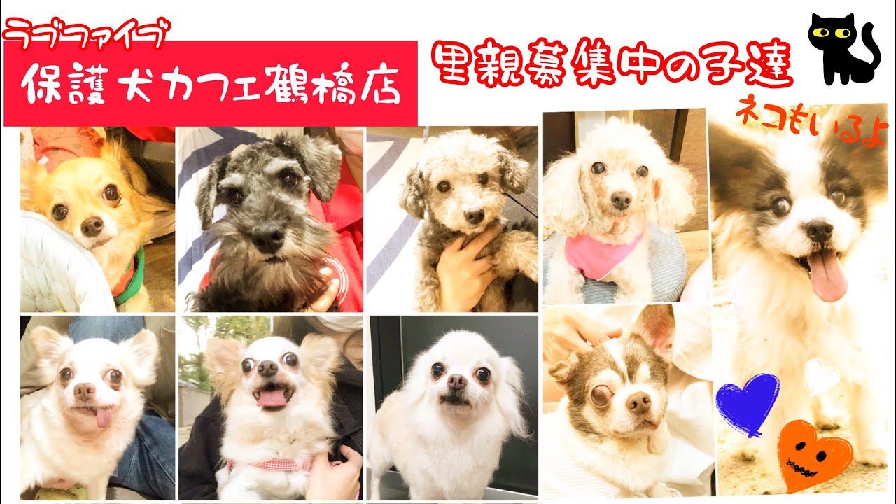鶴橋 店 保護 犬 カフェ