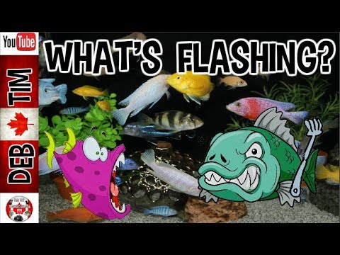 WHAT IS FLASHING AND WHAT CAUSES IT