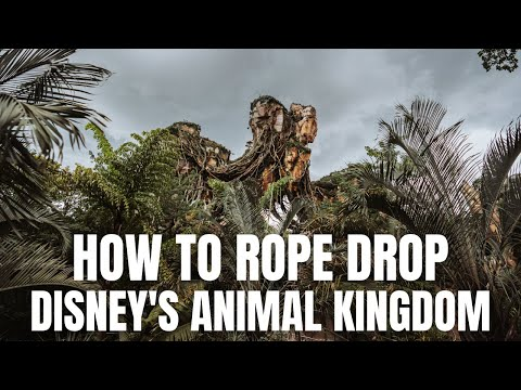 How To Disney: Rope Drop At Disney's Animal Kingdom