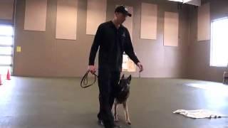 Snoepje (german Shepherd) Boot Camp Dog Training Demonstration
