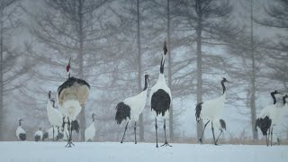 Subscribe to BBC Earth: http://bit.ly/BBCEarthSubBBC Earth YouTube ...
