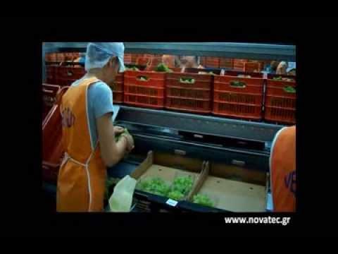 Table Grapes Packaging Line_Novatec Γραμμή Συσκευασίας Σταφυλιών
