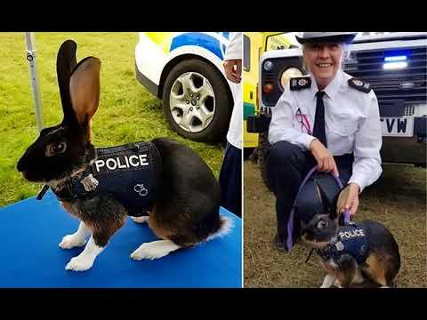 BREAKING! Surrey police's Facebook snap of 'PC Thumper' was a JOKE ...