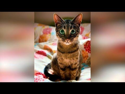 Кошки 2019 Смешные Коты 2019 приколы про котов с котами до слёз. Смешные кошки Funny Cats #72
