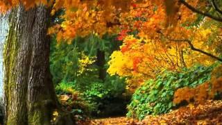 Carla Bruni - autumn