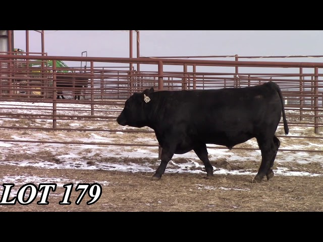 Mead Angus Farms Lot 179