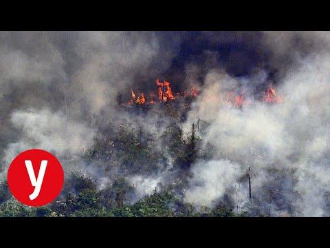 שריפות יער אמזונס משבר אקלים
