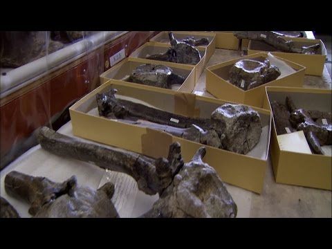 How Do Paleontologists Date Fossils? | Secrets of the Underground