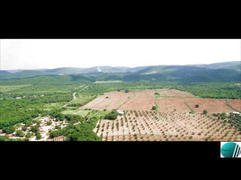 Mango Farm in somanya Ghana drone footage