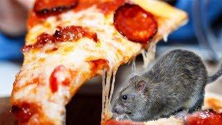 Has Pizza Rat Returned?