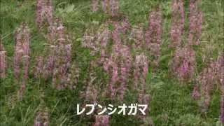 6月19日江戸屋山道の見頃の花