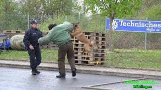 "DIENSTHUNDE BUNDESPOLIZEI - (Sprengstoffsuchhunde) + ABSUCHE + HUND STELLT TÃ""TER - [V]"