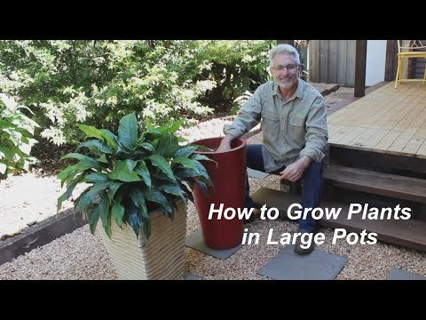 Growing Plants In Large Pots