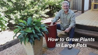 Plants grown in large pots don