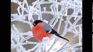Фото слайд-шоу Птицы зимой(Загружено с помощью Free Video Converter от Freemake http://www.freemake.com/ru/free_video_converter/, 2014-01-30T23:32:32.000Z)