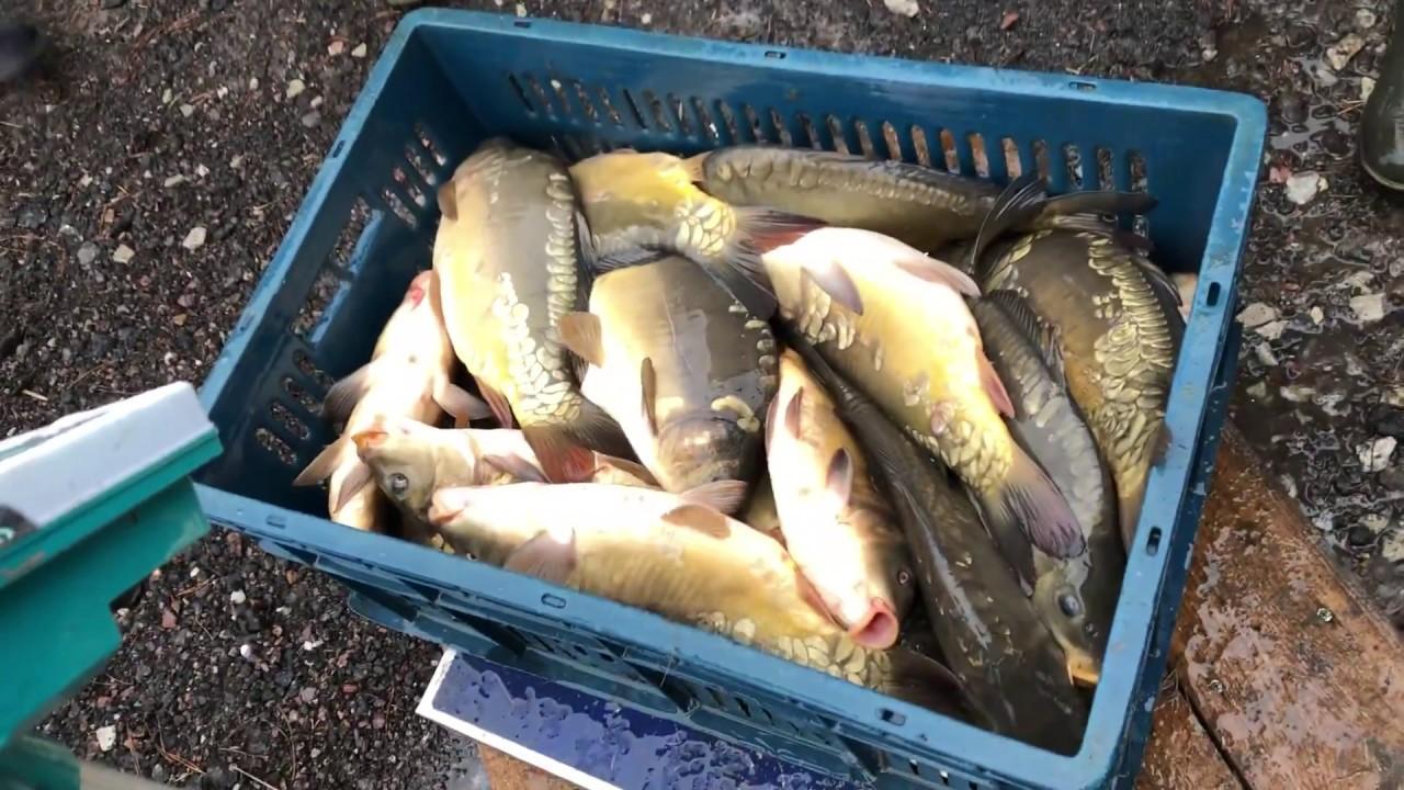 Рыбалка в ноябре брянск