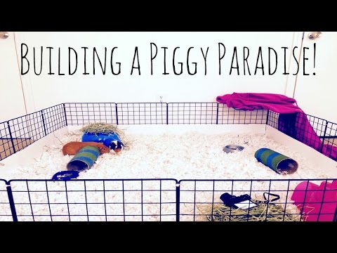 DIY Guinea Pig C&C Cage | How To Build A C&C Cage!