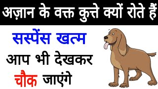 Download Dogs Azan Ke Time Kyu Rote Hai Videos - Dcyoutube