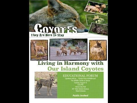 The Scoop News Video Report: Update on last nights coyote forum in Venice