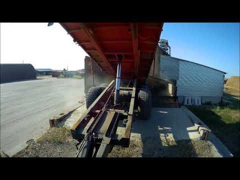 МТЗ 1221, АКРОС 550  Вывозка зерна из под комбайна!