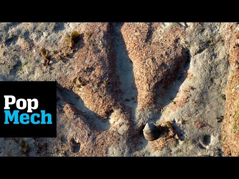 Hundreds of Dinosaur Footprints Found in Scotland | PopMech