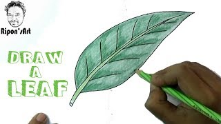 How to draw and color a LEAF easy