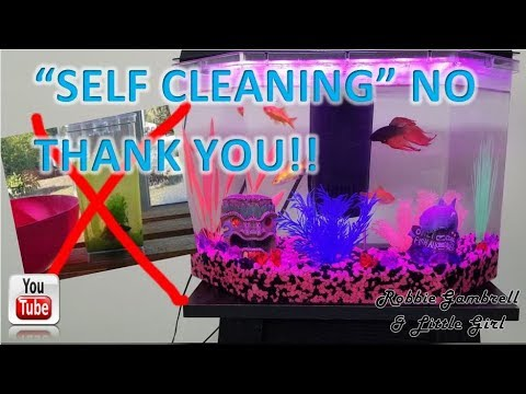 """""""SELF CLEANING"""" Fish tank wasnt cutting it!! Goldfish and Beta in the same tank?"""