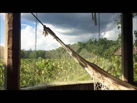 Tips when traveling to the Amazon jungle